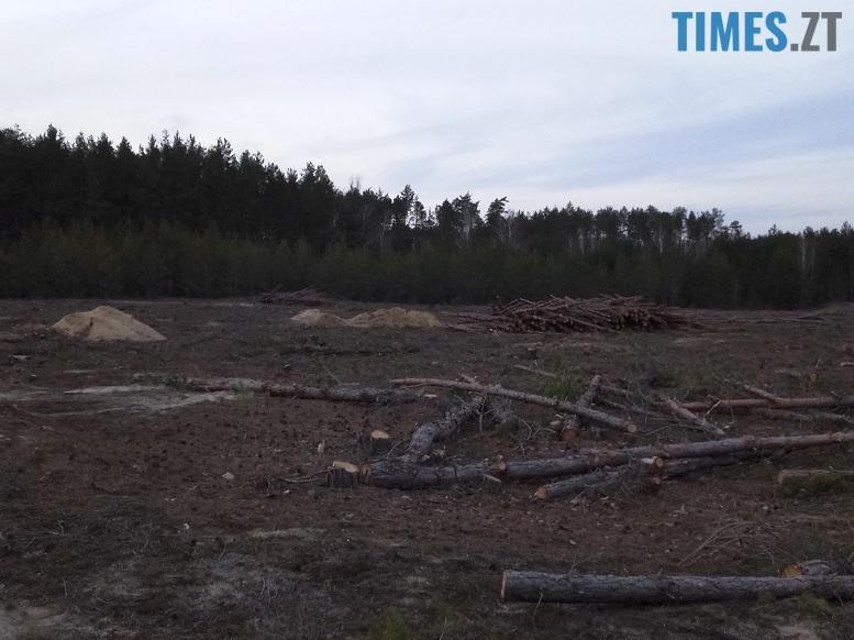 IMG 6667 - Мародерів, які нищать ліси України, хочуть «садити» довічно (фото, відео)