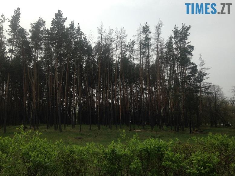 IMG 7387 - Мародерів, які нищать ліси України, хочуть «садити» довічно (фото, відео)