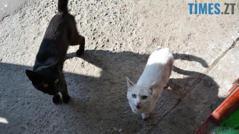 коти edited 777x437 - Біла кицька, чорний кіт: вони вмирають на вулиці від голоду…