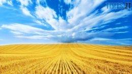 260x146 - День прапора та День Незалежності: що чекає на житомирян та гостей міста (ПРОГРАМА)