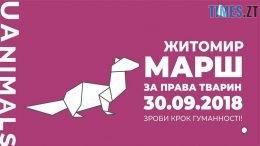 39872792 1721227604599118 7293693000843001856 n 260x146 - Житомир знову долучиться до маршу за права тварин