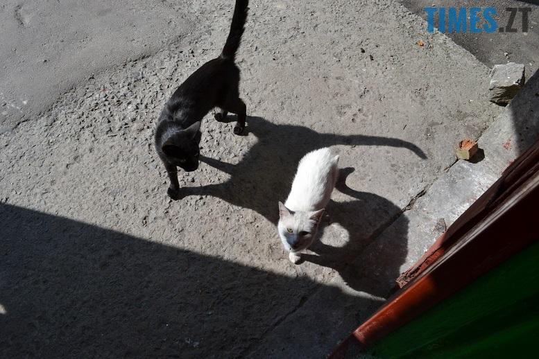 DSC 3311 edited - Біла кицька, чорний кіт: вони вмирають на вулиці від голоду…