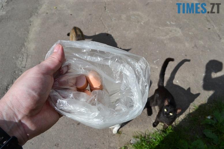 DSC 3316 edited - Біла кицька, чорний кіт: вони вмирають на вулиці від голоду…