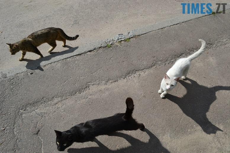 DSC 3318 edited - Біла кицька, чорний кіт: вони вмирають на вулиці від голоду…