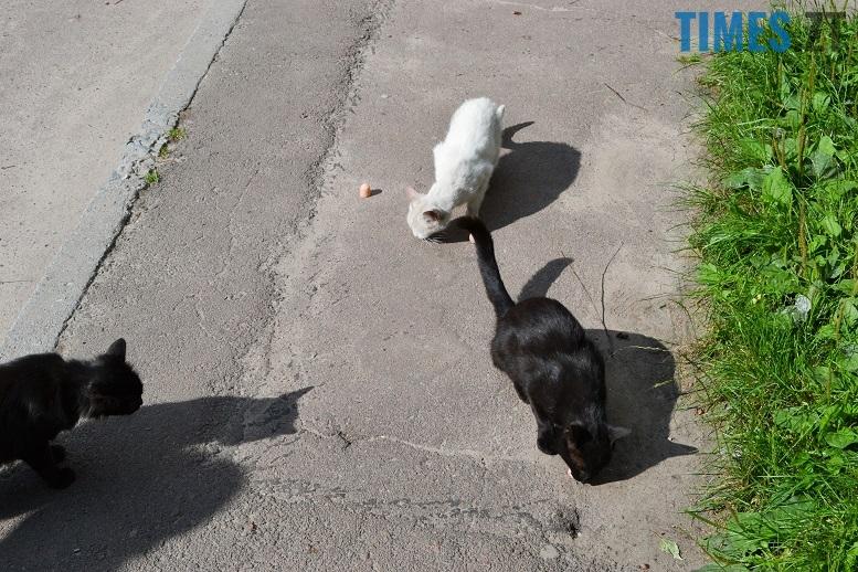 DSC 3319 edited - Біла кицька, чорний кіт: вони вмирають на вулиці від голоду…