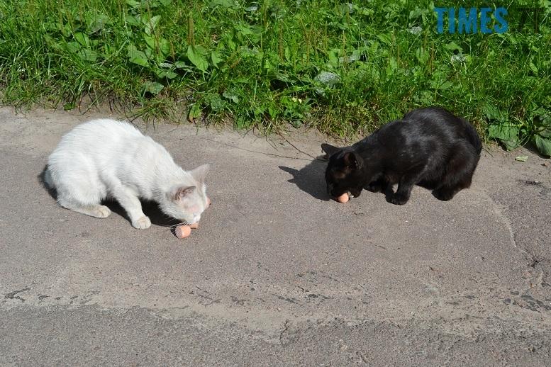 DSC 3326 edited - Біла кицька, чорний кіт: вони вмирають на вулиці від голоду…