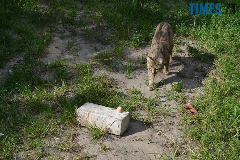 DSC 3328 edited - Біла кицька, чорний кіт: вони вмирають на вулиці від голоду…