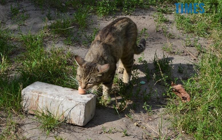 DSC 3329 edited - Біла кицька, чорний кіт: вони вмирають на вулиці від голоду…