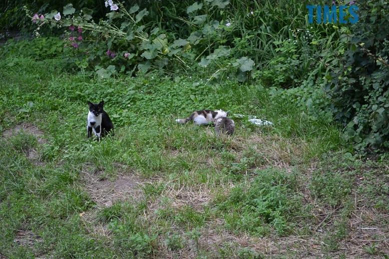 DSC 3331 edited - Біла кицька, чорний кіт: вони вмирають на вулиці від голоду…
