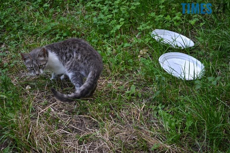 DSC 3338 edited - Біла кицька, чорний кіт: вони вмирають на вулиці від голоду…