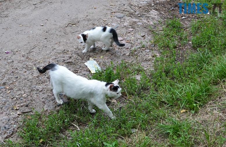 DSC 3339 edited - Біла кицька, чорний кіт: вони вмирають на вулиці від голоду…