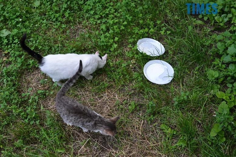 DSC 3340 edited - Біла кицька, чорний кіт: вони вмирають на вулиці від голоду…
