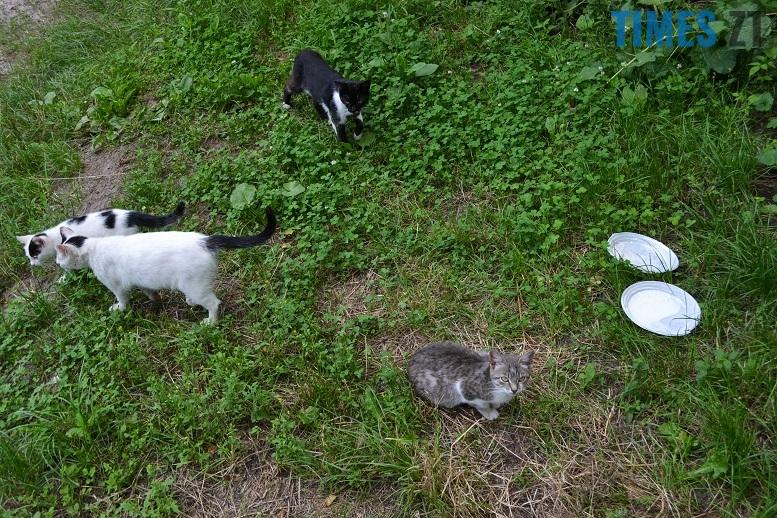 DSC 3343 edited - Біла кицька, чорний кіт: вони вмирають на вулиці від голоду…