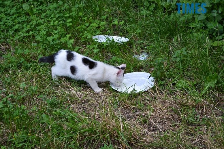 DSC 3350 edited - Біла кицька, чорний кіт: вони вмирають на вулиці від голоду…