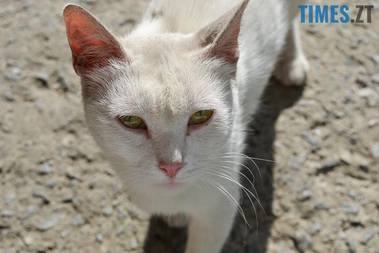 DSC 3352 edited - Біла кицька, чорний кіт: вони вмирають на вулиці від голоду…