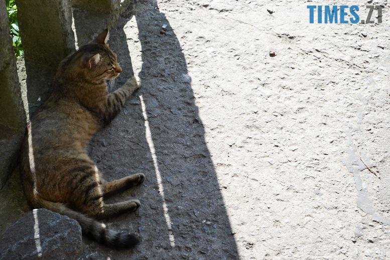 DSC 3357 edited - Біла кицька, чорний кіт: вони вмирають на вулиці від голоду…