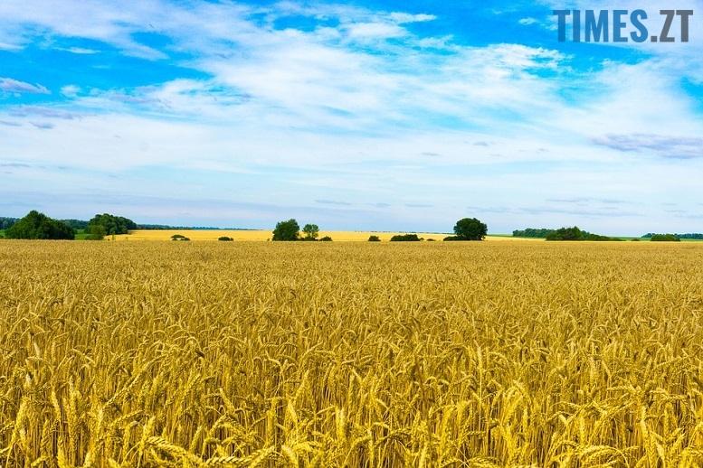 field 2513145 960 720 - Населення Землі збільшується, а України – зменшується. Чому?