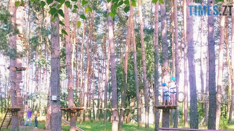 gidropark dereva - Житомиряни просять міську владу висадити нові дерева у Гідропарку