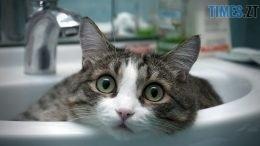 www.GetBg .net Animals Cats Cat in sink 030028  260x146 - Зупинку води, заплановану на найближчі вихідні, перенесли через звернення житомирян