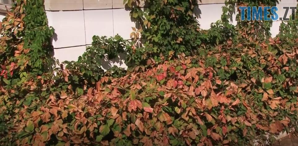 экрана от 2018 09 07 11 20 17 - Кримський «чорнобиль»: кислотні дощі, загибель тварин та рослин, масова евакуація