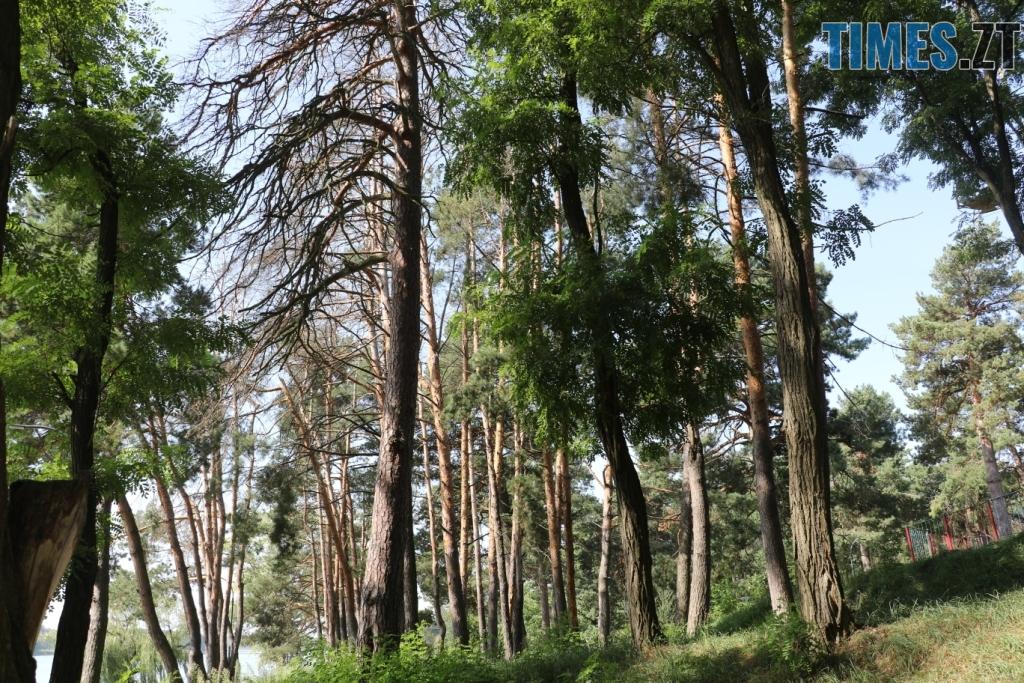 дерева - Вирізані дерева, нові атракціони та еко-фестиваль: що нового у Гідропарку (ФОТО)