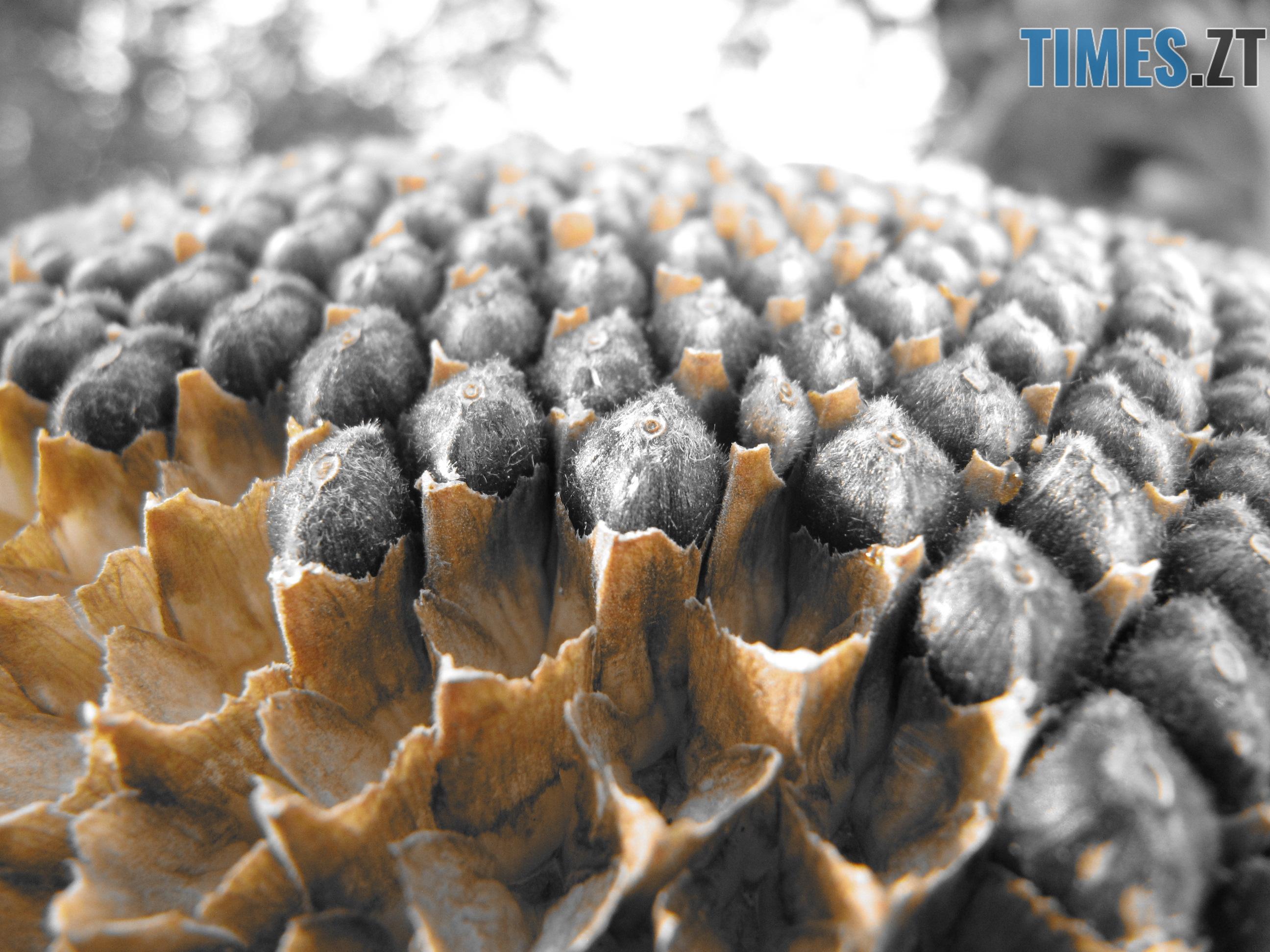 Т. Ріхтер 4 - Осіннє рівнодення: осінь вступила в законні права (ФОТО)