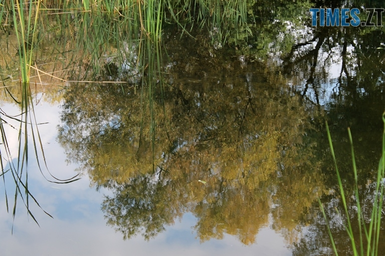 1aaaagrogroshi8 - За понад півтора мільйона гривень в Ботанічному саду відновили водойми (ФОТО)