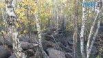 150x84 - Осінні барви: бабине літо на Житомирщині