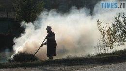листя 260x146 - Горить і димить: за спалене листя жодного житомирянина поки не оштрафували
