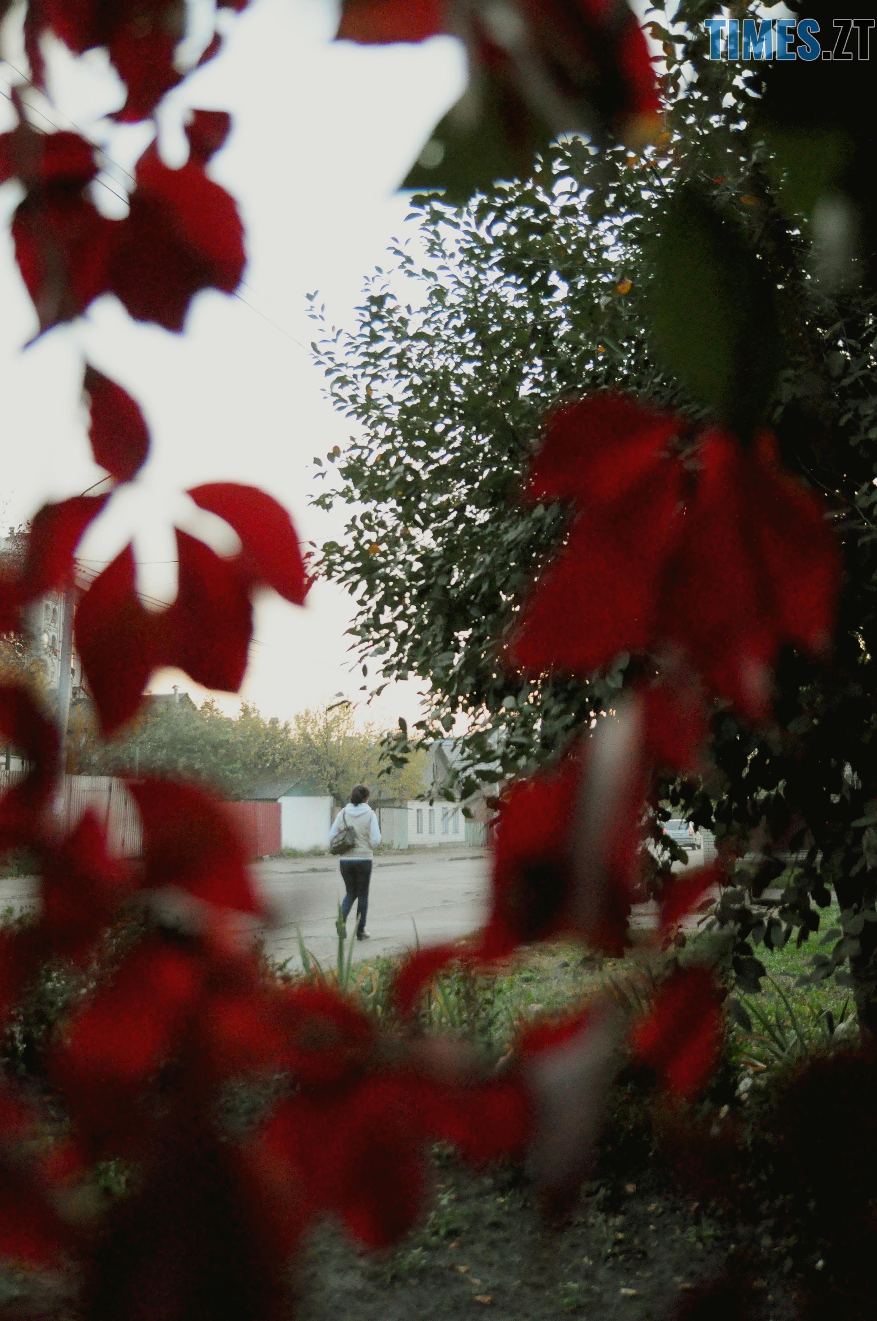 12 1 - Житомир як на долоні: форма, колір, запах цієї осені