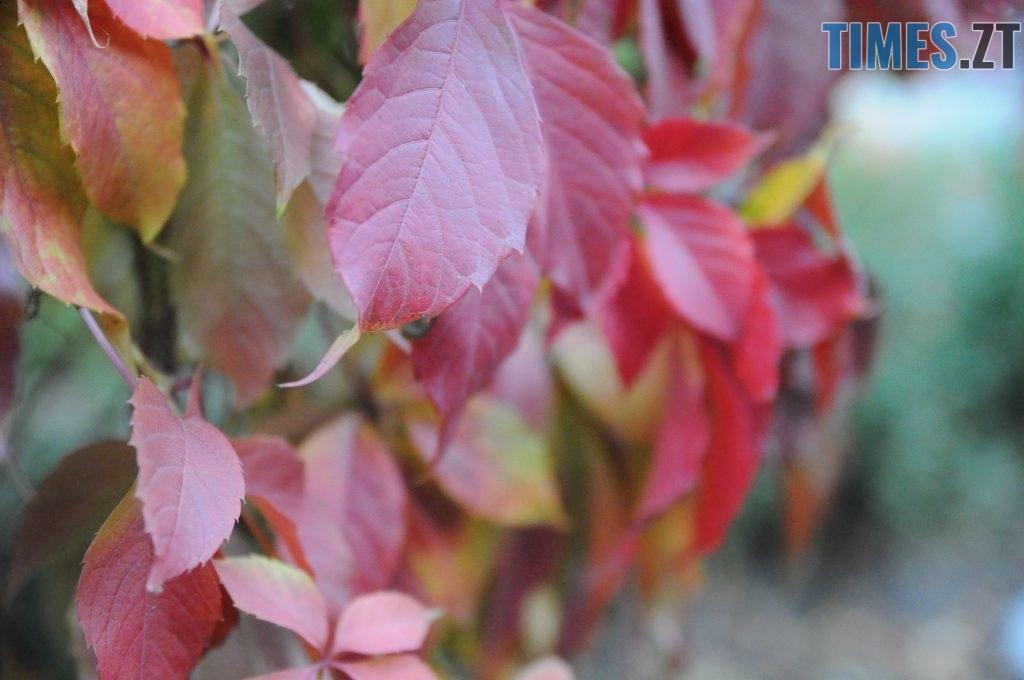 13 1 1024x680 - Житомир як на долоні: форма, колір, запах цієї осені