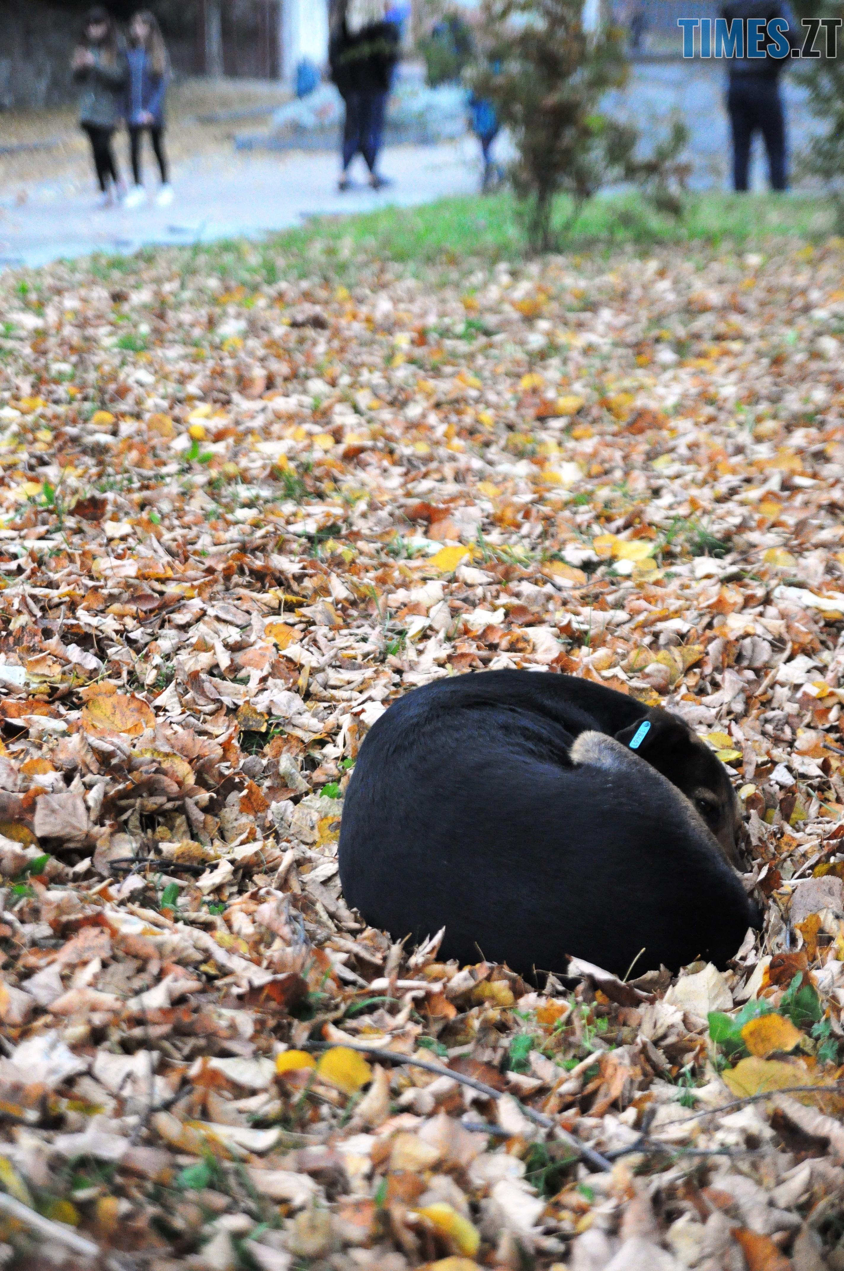 14 1 - Житомир як на долоні: форма, колір, запах цієї осені