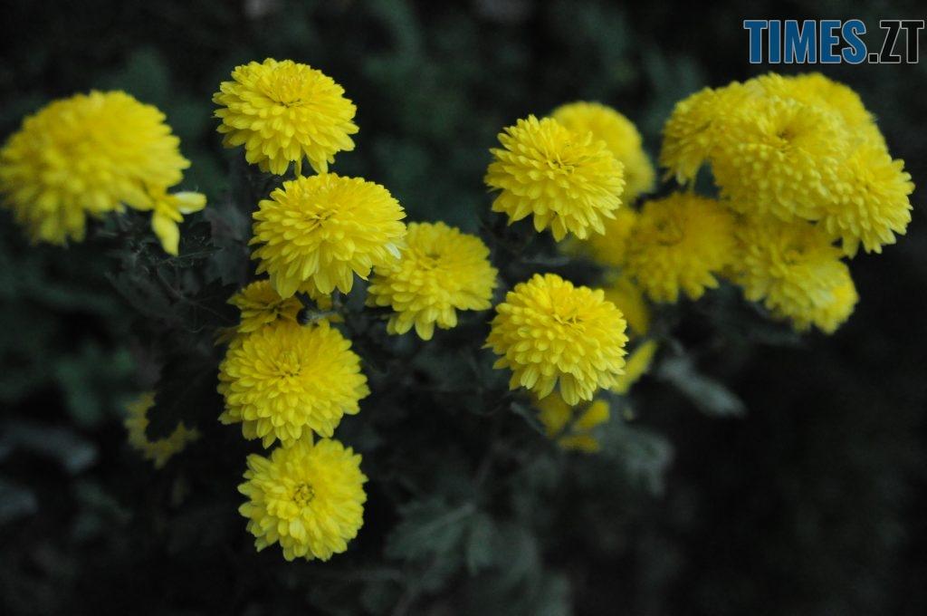 16 1 1024x680 - Житомир як на долоні: форма, колір, запах цієї осені