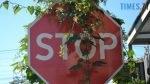 DSC 0094 1 150x84 - Які вулиці перекриють у Житомирі цими вихідними