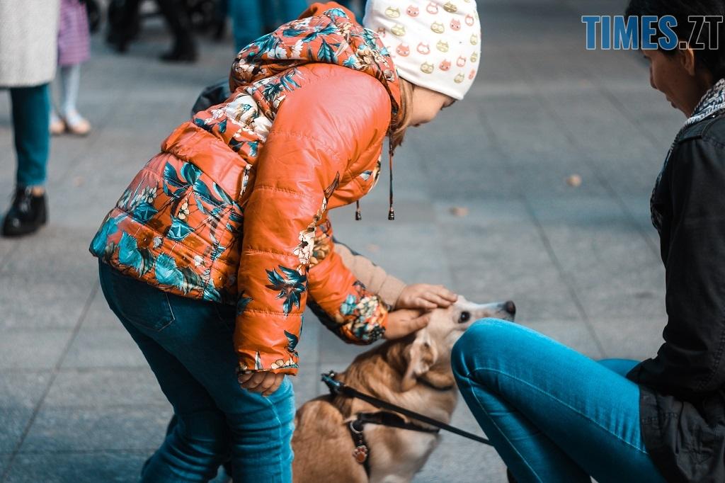 IMG 1168 - З плакатами та домашніми улюбленцями житомиряни вийшли відстоювати права тварин (ФОТОРЕПОРТАЖ)