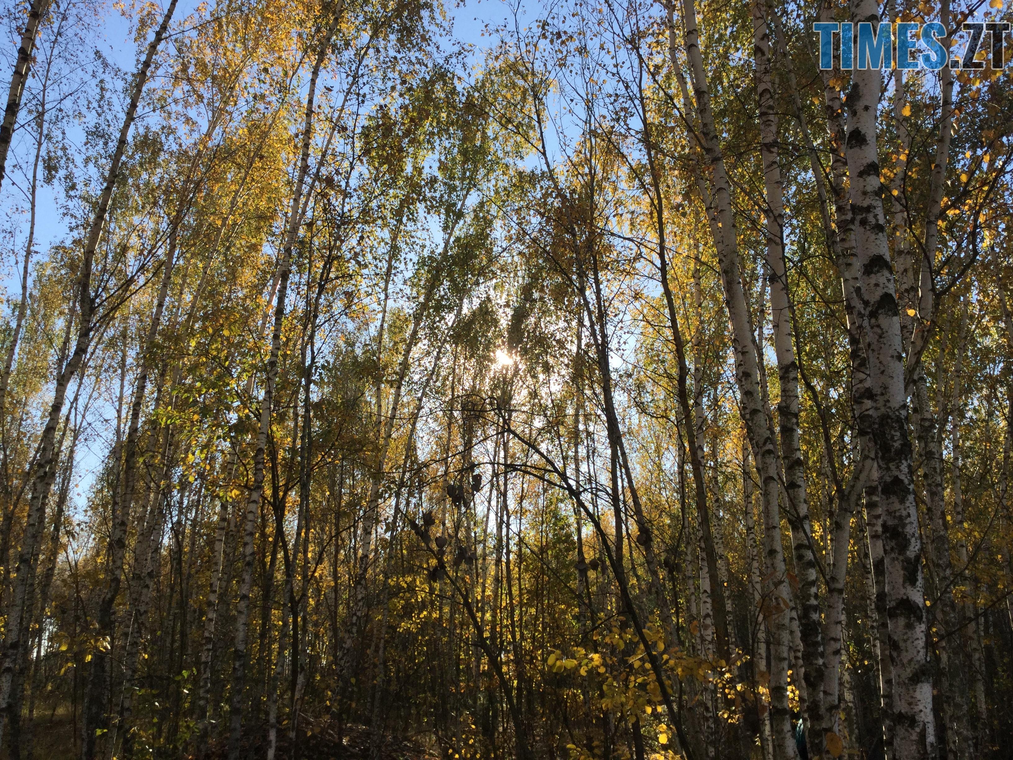 IMG 1181 - Осінні барви: бабине літо на Житомирщині