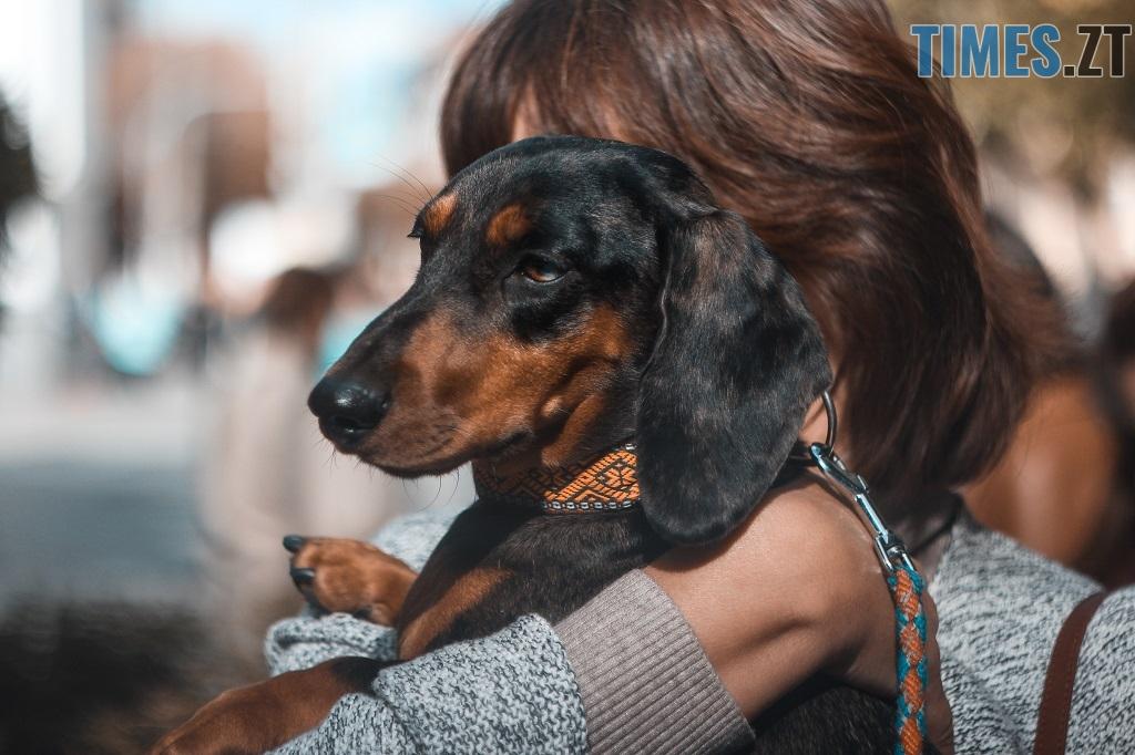 IMG 1210 - З плакатами та домашніми улюбленцями житомиряни вийшли відстоювати права тварин (ФОТОРЕПОРТАЖ)