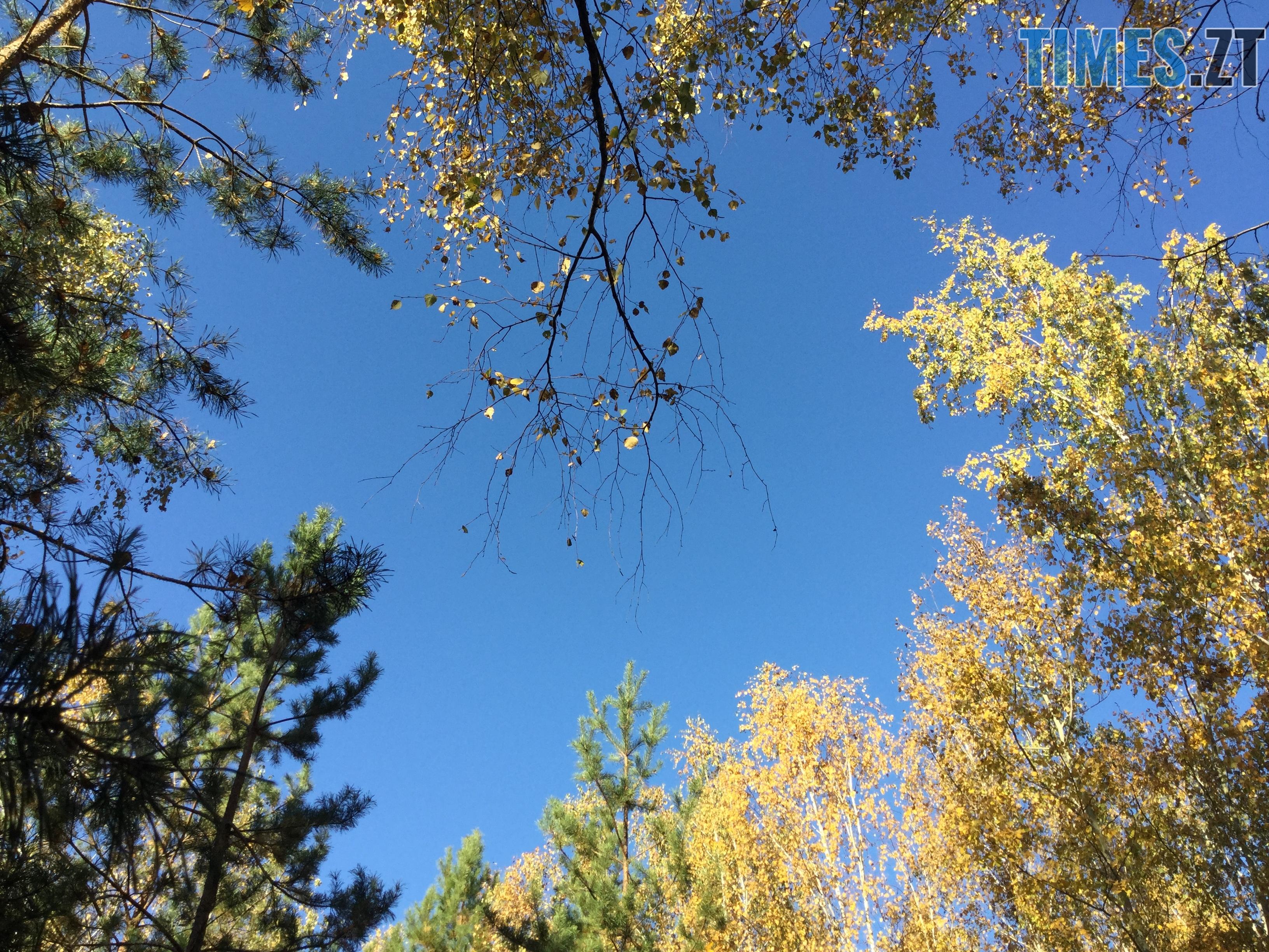 IMG 1213 - Осінні барви: бабине літо на Житомирщині