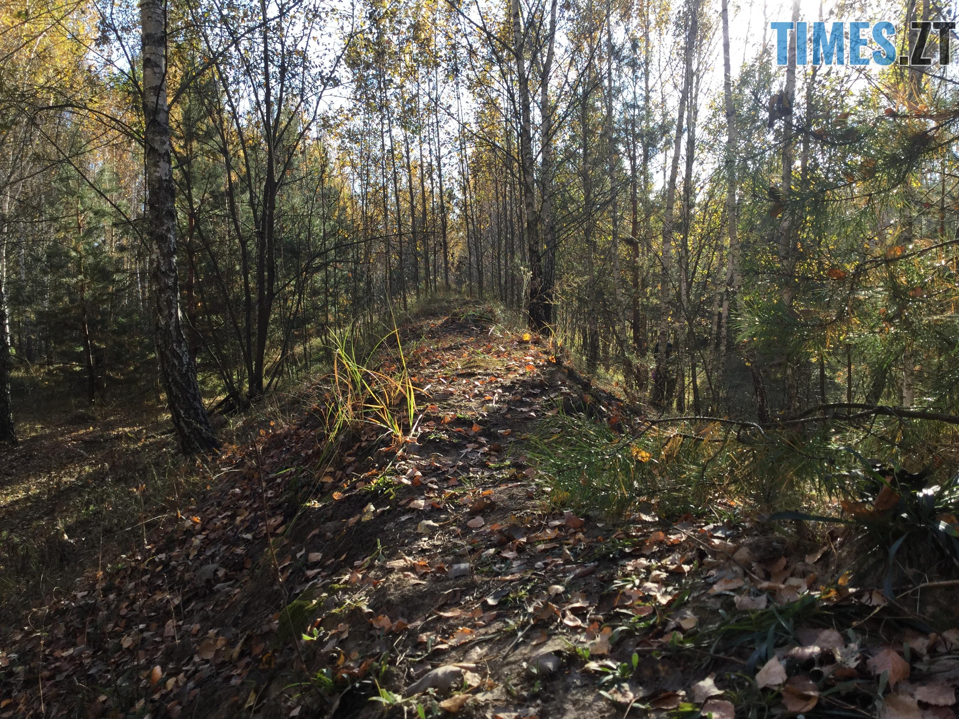 IMG 1222 - Осінні барви: бабине літо на Житомирщині