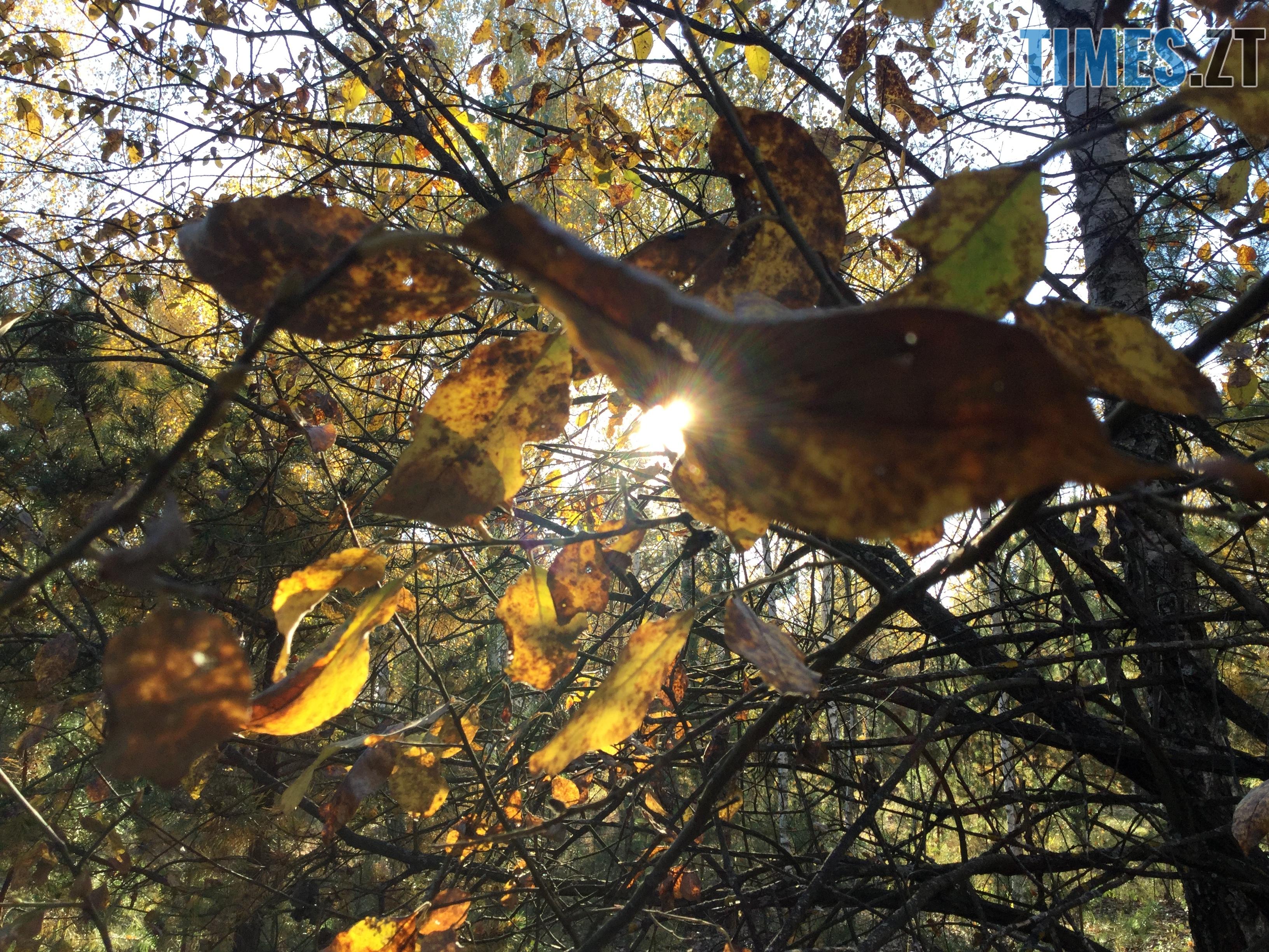 IMG 1258 - Осінні барви: бабине літо на Житомирщині