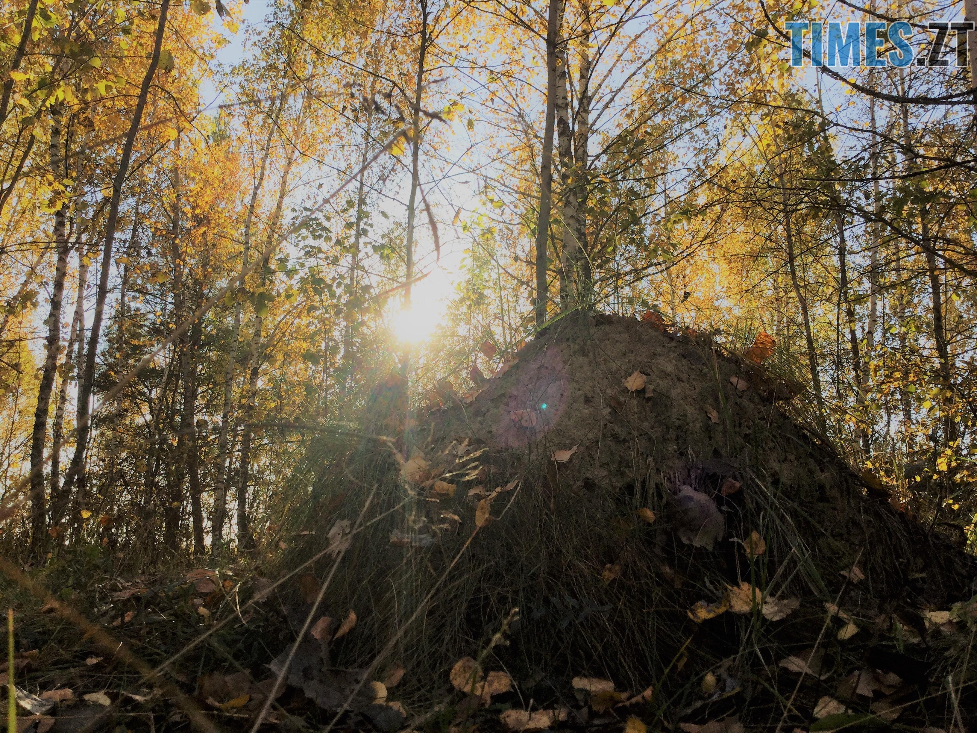 IMG 1266 - Осінні барви: бабине літо на Житомирщині