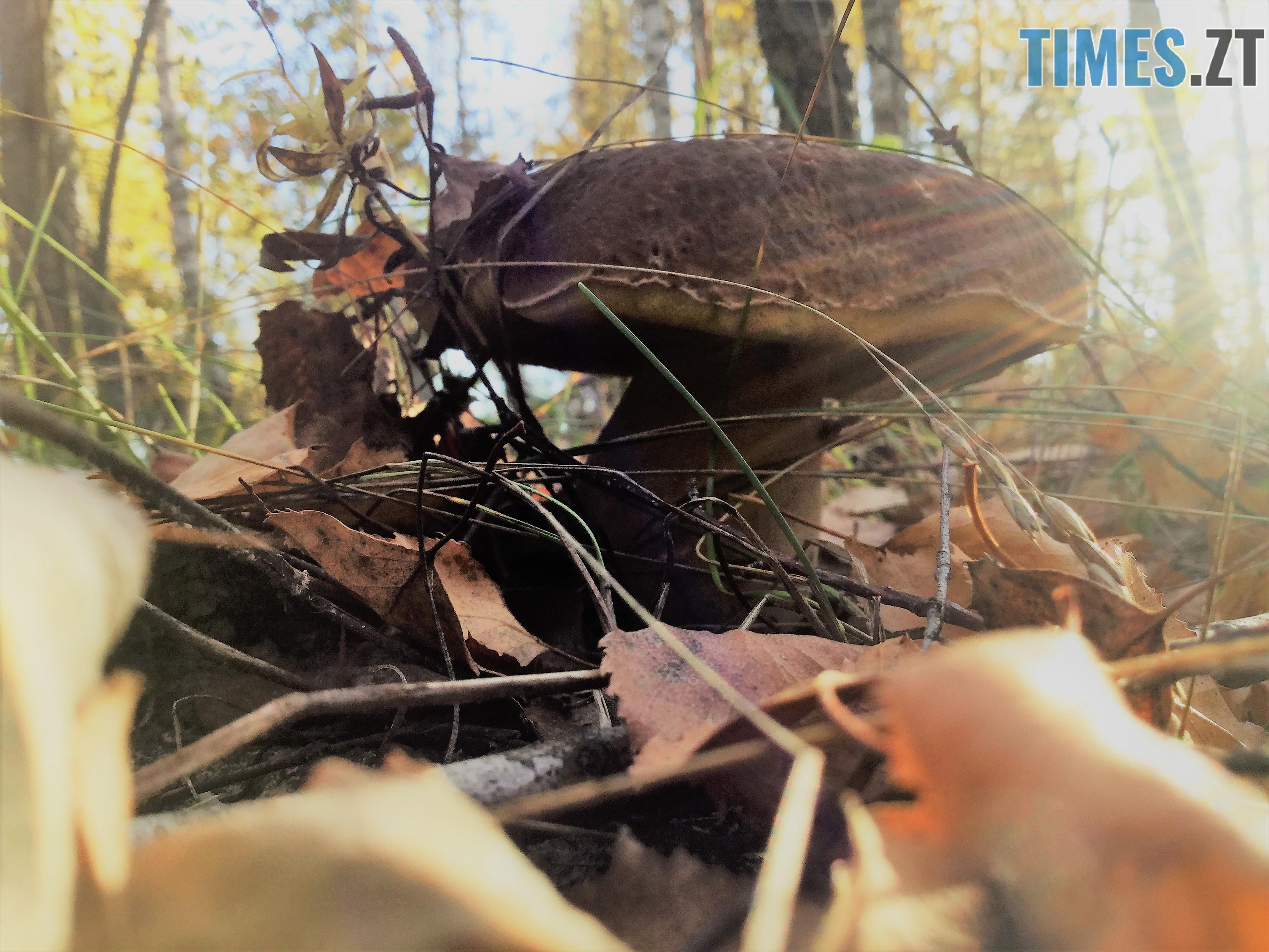 IMG 1275 - Осінні барви: бабине літо на Житомирщині