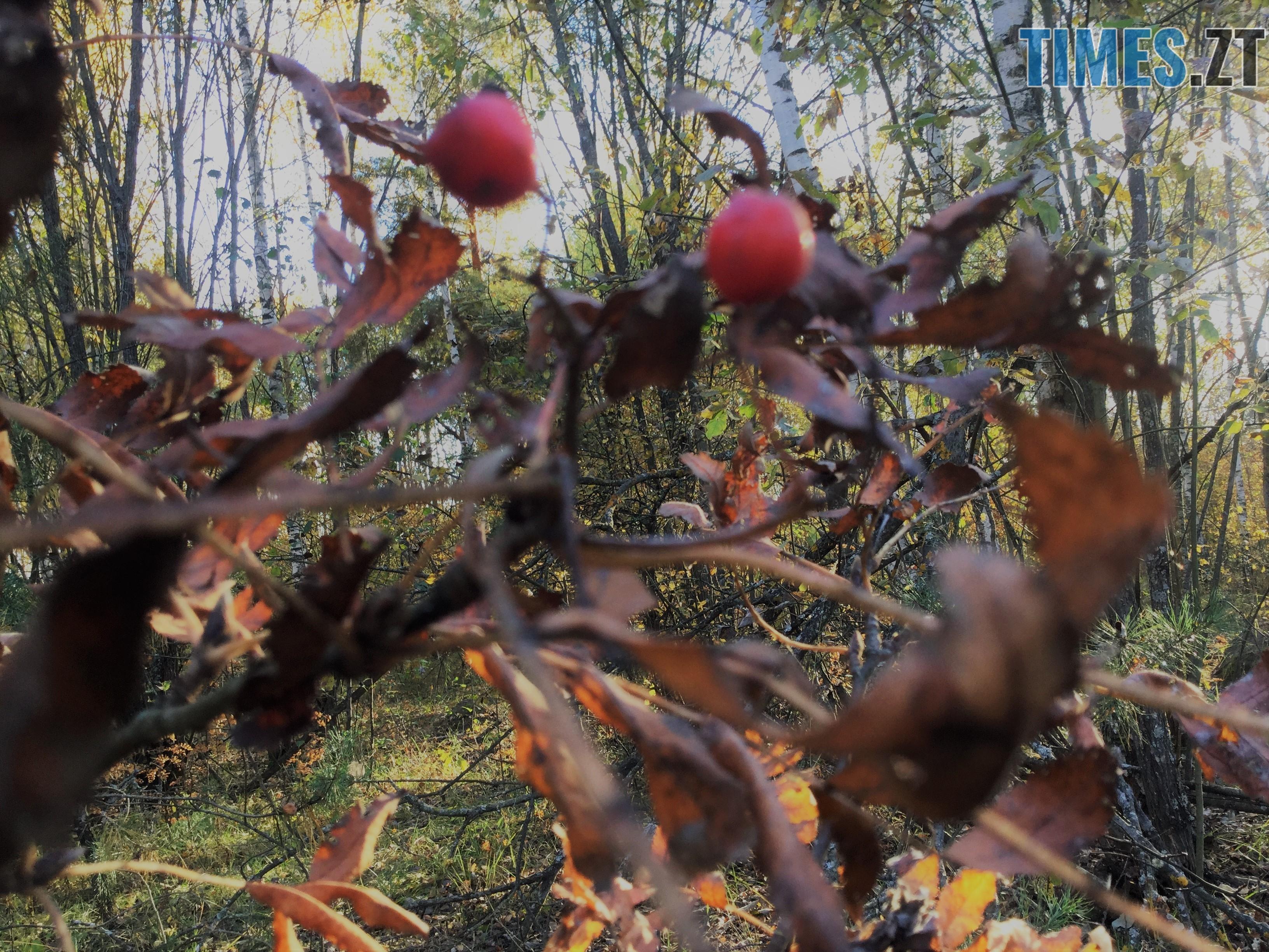 IMG 1295 - Осінні барви: бабине літо на Житомирщині