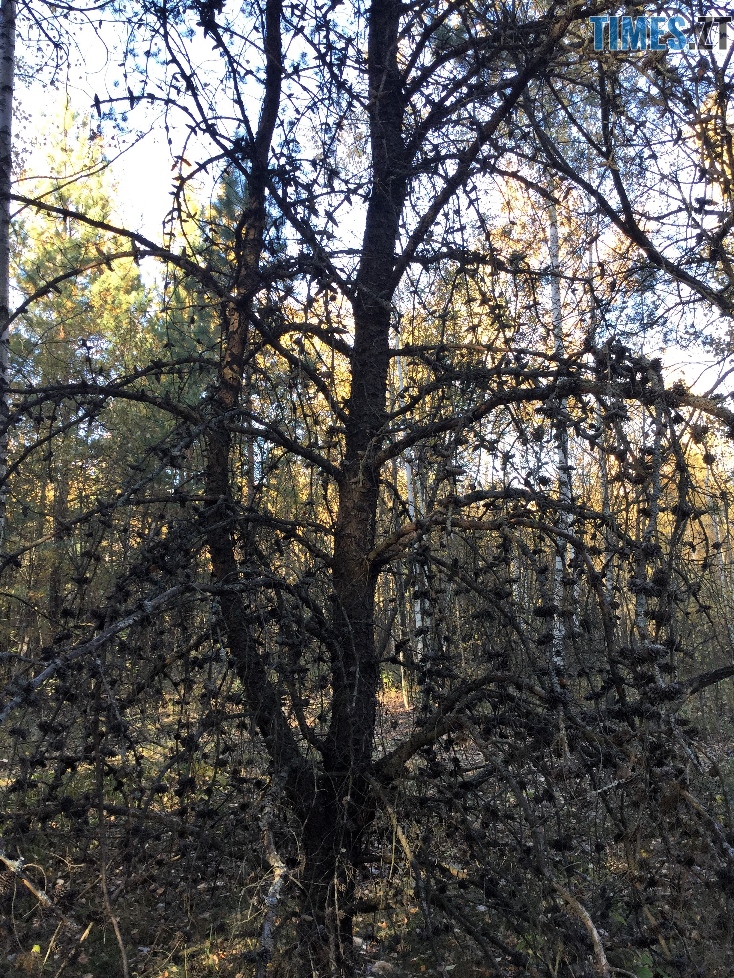 IMG 1309 - Осінні барви: бабине літо на Житомирщині