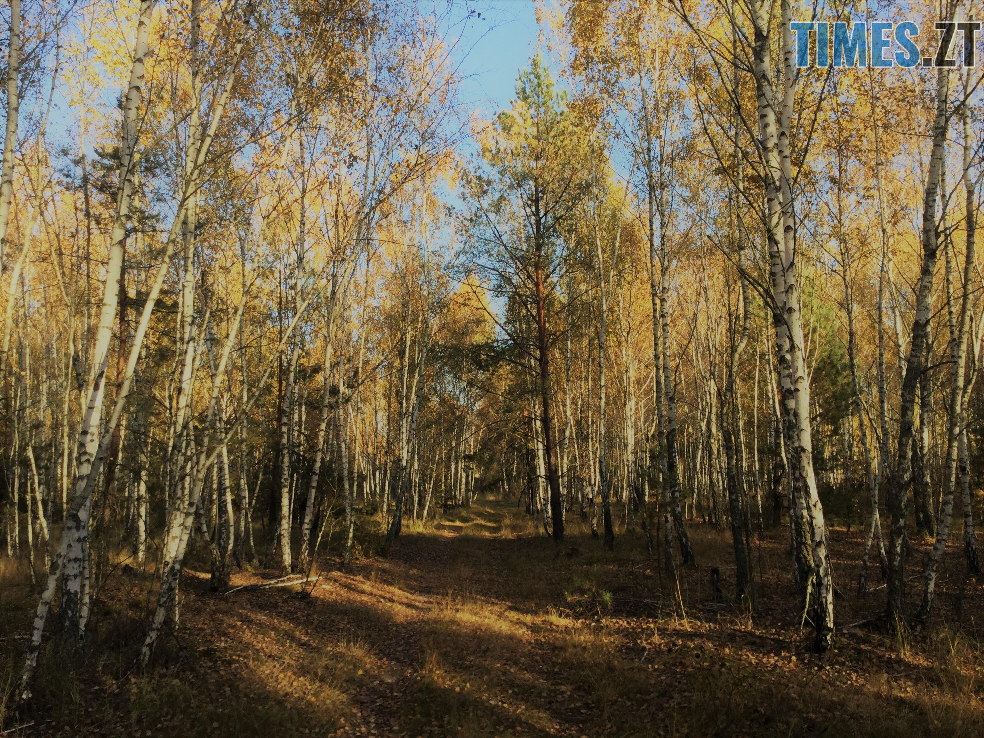 IMG 1319 - Осінні барви: бабине літо на Житомирщині