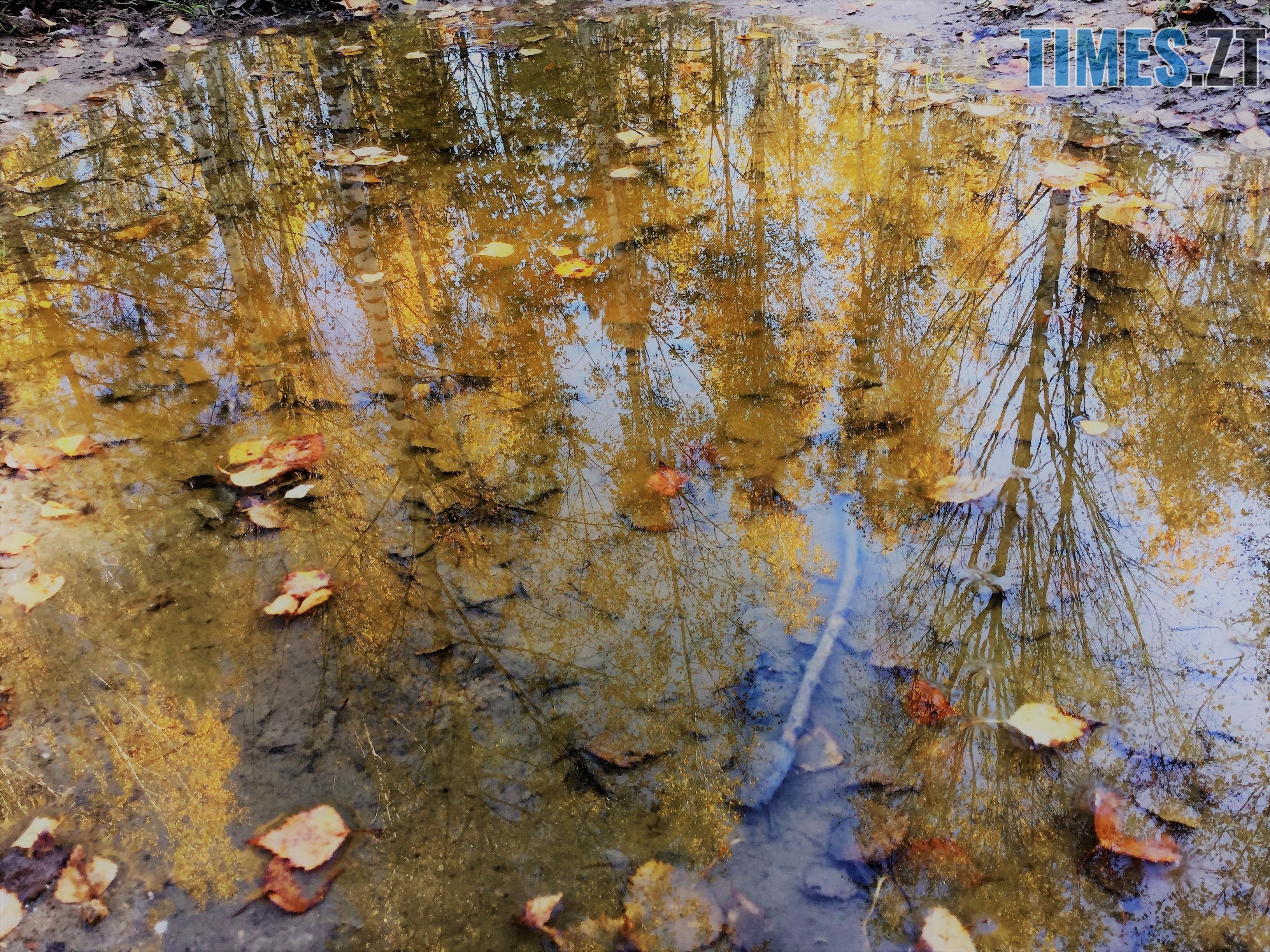 IMG 1348 - Осінні барви: бабине літо на Житомирщині