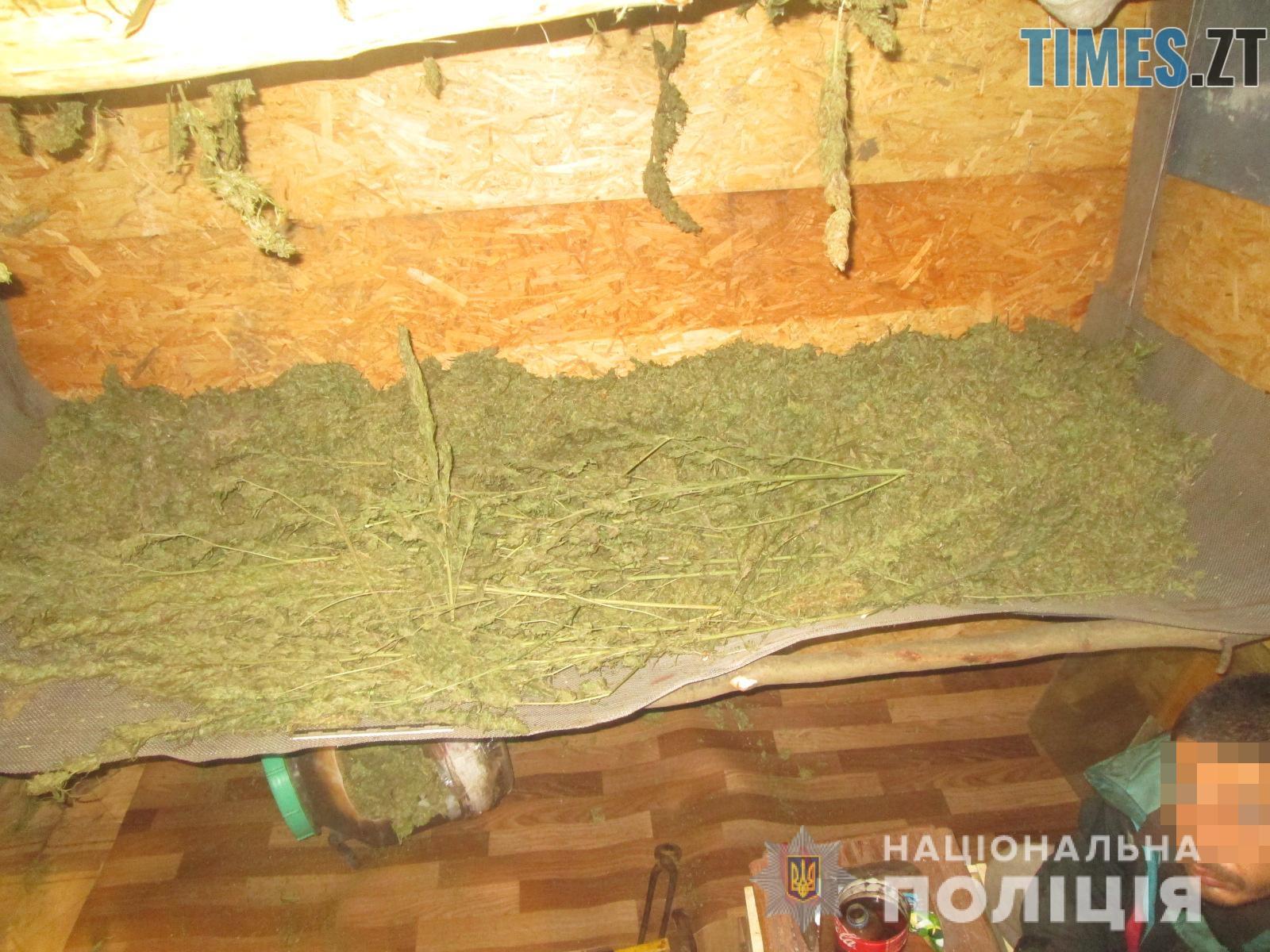 IMG 3000 - Наркоплантатор по-бердичівськи: поліція вилучила у місцевого жителя півтонни коноплі