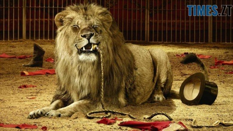 levpletkaarenacirkkletka192x12 3 795x546 - До Житомира більше не приїжджатимуть цирки, у програмі яких є тварини