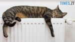 tmb 143927 7119 150x84 - На скільки та чому підніметься вартість теплопостачання у Житомирі