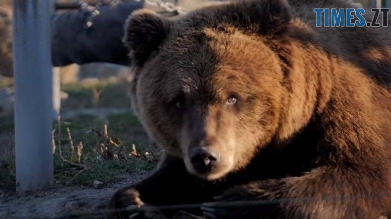 46526247 1871212922926998 6014050930004066304 n - Як на Житомирщині реабілітують ведмедів після цирків та утримання неналежних умовах